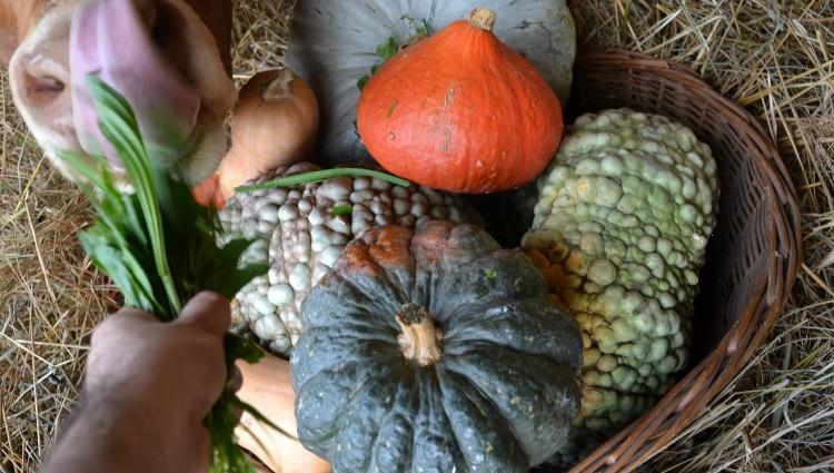 CASCINE IN CITTA' bottega agricola nel Parco del Ticino